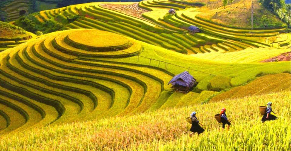 Các mùa du lịch Hà Giang mùa nào đẹp nhất trong năm