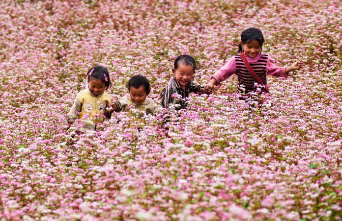 Ảnh: Tran Van. Lễ hội hoa tam giác mạch - điểm thú vị nhưng dễ bị bỏ quên ở Hà Giang